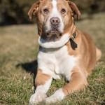 Indigo-Pet-Photography-Casper-004a