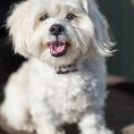Indigo-Pet-Photography-Lacey-005a
