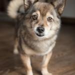 Indigo-Pet-Photography-Lincoln-good