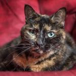Indigo-Pet-Photography-Mitzy-nwm-001