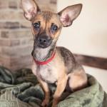 Indigo-Pet-Photography-Roo-Good Crop