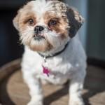 Indigo-Pet-Photography-Zoey-002a