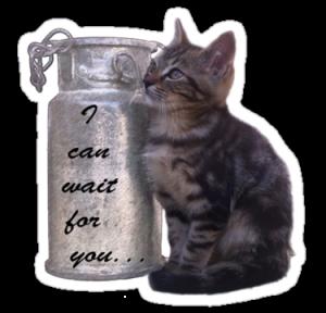 cat in can