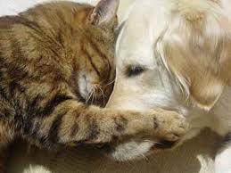 catanddoghugging