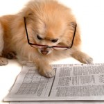 Dog Reads Newspaper